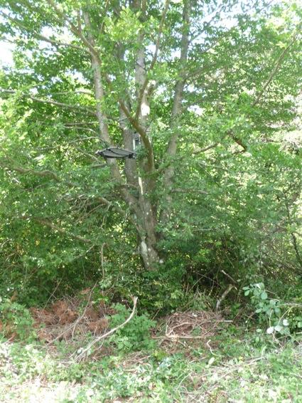 AVIS SUR TREE STAND GORILLA P1020112