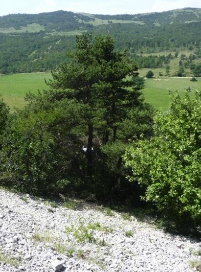 AVIS SUR TREE STAND GORILLA P1030219