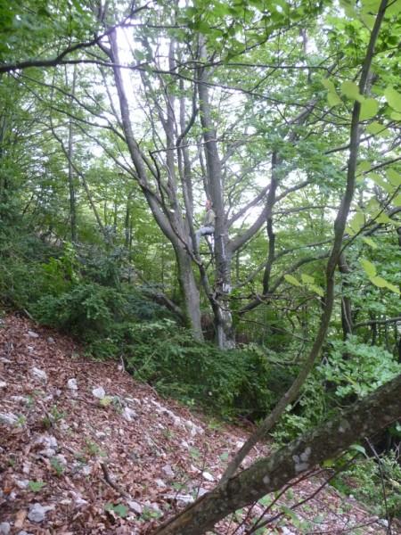 AVIS SUR TREE STAND GORILLA P1030534