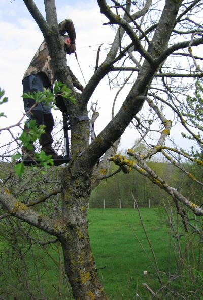 AVIS SUR TREE STAND GORILLA Ts11010