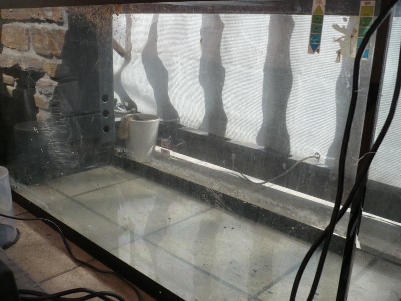 Mon premier Aquarium, réfection totale. P1070112