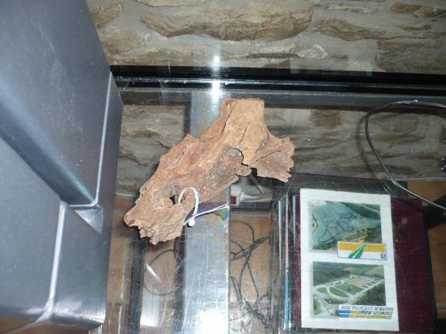 Mon premier Aquarium, réfection totale. P1070115
