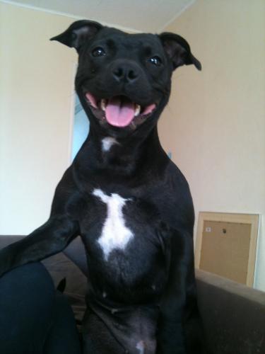 à Adopter chienne E'Naïa - 3 ans [Adoptée] Naia210
