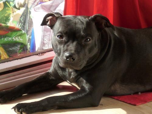 à Adopter chienne E'Naïa - 3 ans [Adoptée] Naia510