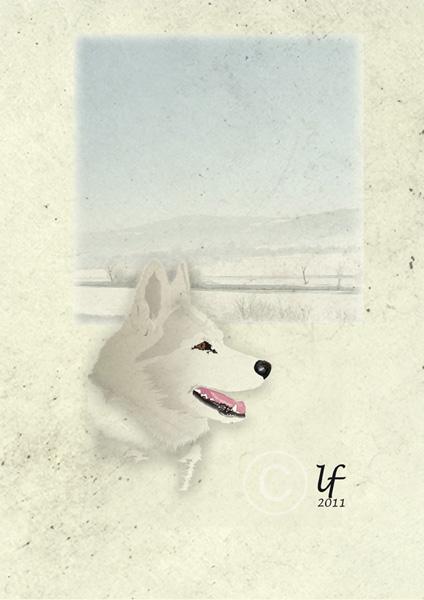 Illustrations animalières Salsa10