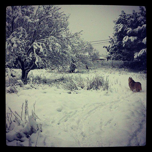 Moochers snow pics 39406310