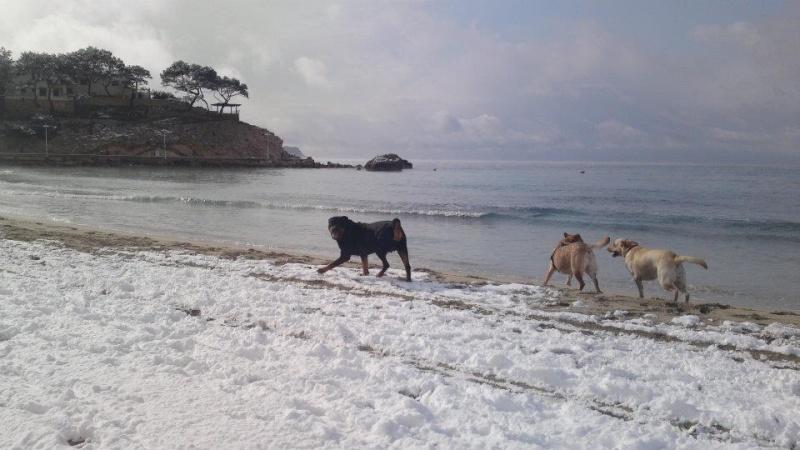 Moochers snow pics 41793410