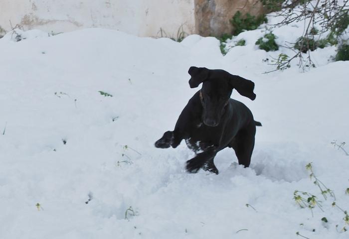 Moochers snow pics By-ben10