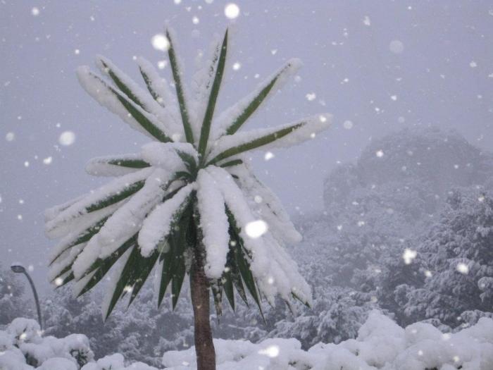 Moochers snow pics Palm-t11