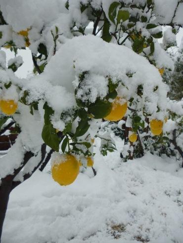 Moochers snow pics Snow-l10