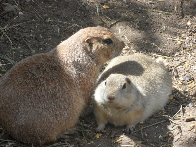 Le refuge des chiens de prairies des hauts de france - Page 2 Bebes_15