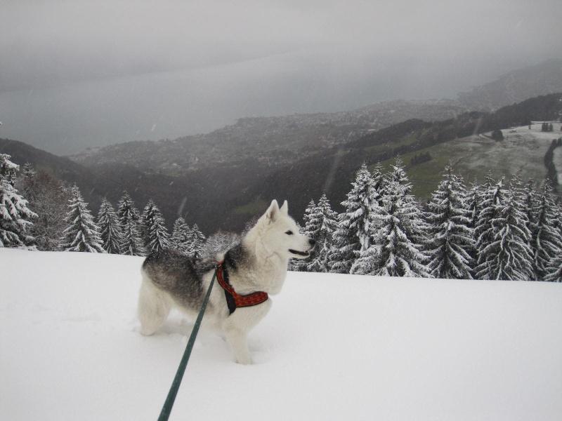 Saskia dans la tempête... 1015
