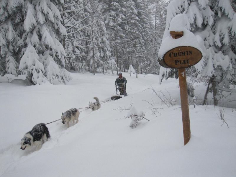Deux attelages perdus dans 50 cm de neige poudreuse! 1017