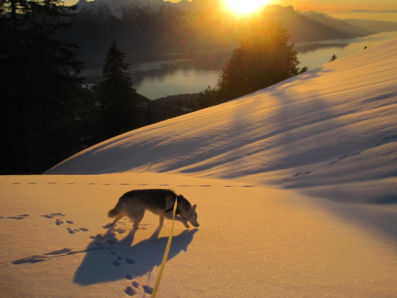 Saskia dans la neige en décembre 2011 1022
