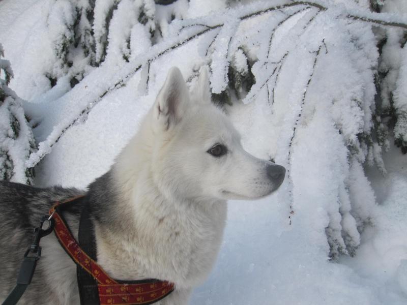 Saskia dans la neige givrée 1027