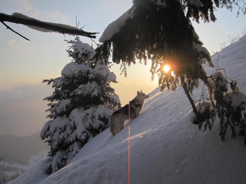 Saskia au coucher du soleil à Orgevaux 1033