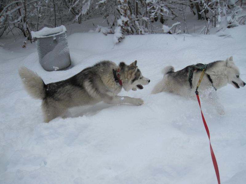 Nouvelles courses de Saskia dans la neige 1039