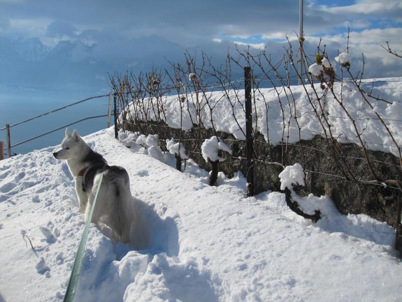 Nouvelles courses de Saskia dans la neige 1041