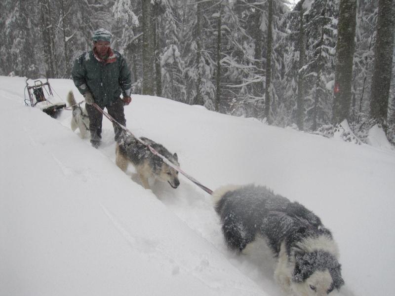 Deux attelages perdus dans 50 cm de neige poudreuse! 1115