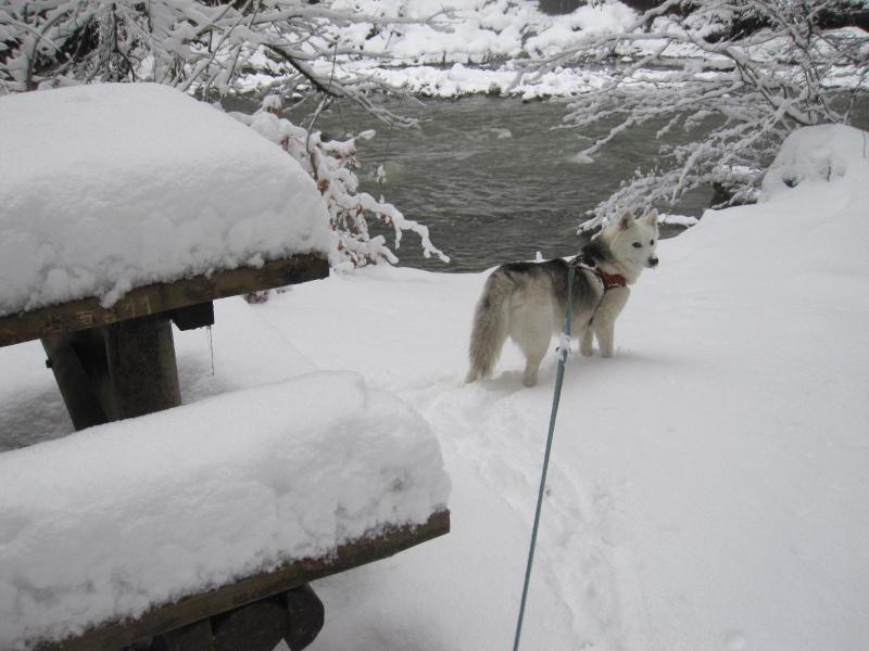 Saskia dans la neige en décembre 2011 1116