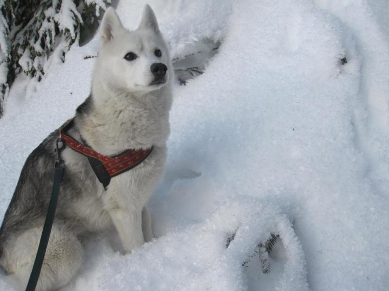 Saskia dans la neige givrée 1125