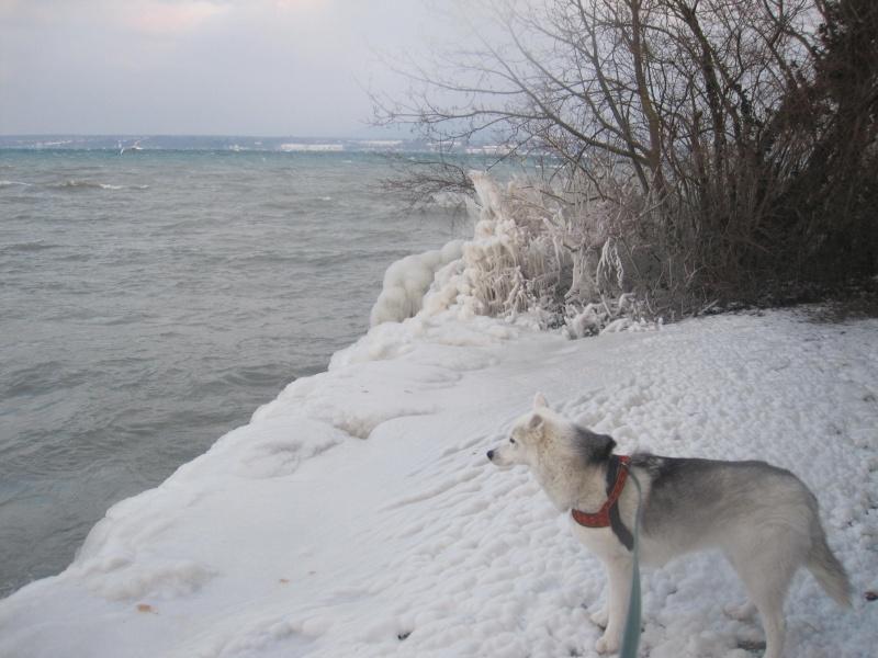 Tempête glacée au bord du lac Léman 1131