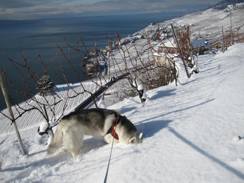 Nouvelles courses de Saskia dans la neige 1138