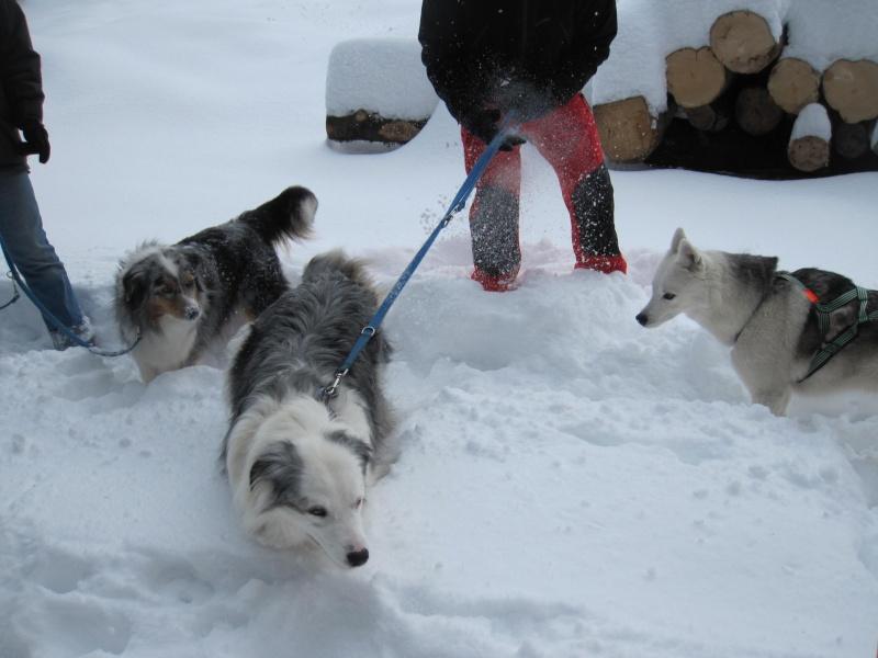 Nouvelles courses de Saskia dans la neige 1139