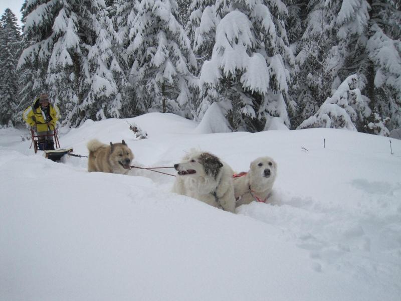 Deux attelages perdus dans 50 cm de neige poudreuse! 118