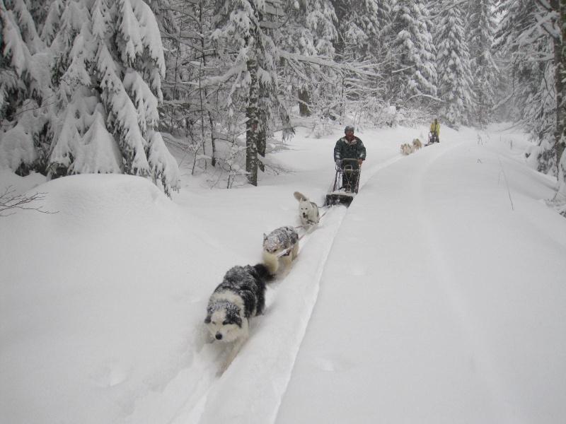 Deux attelages perdus dans 50 cm de neige poudreuse! 1217