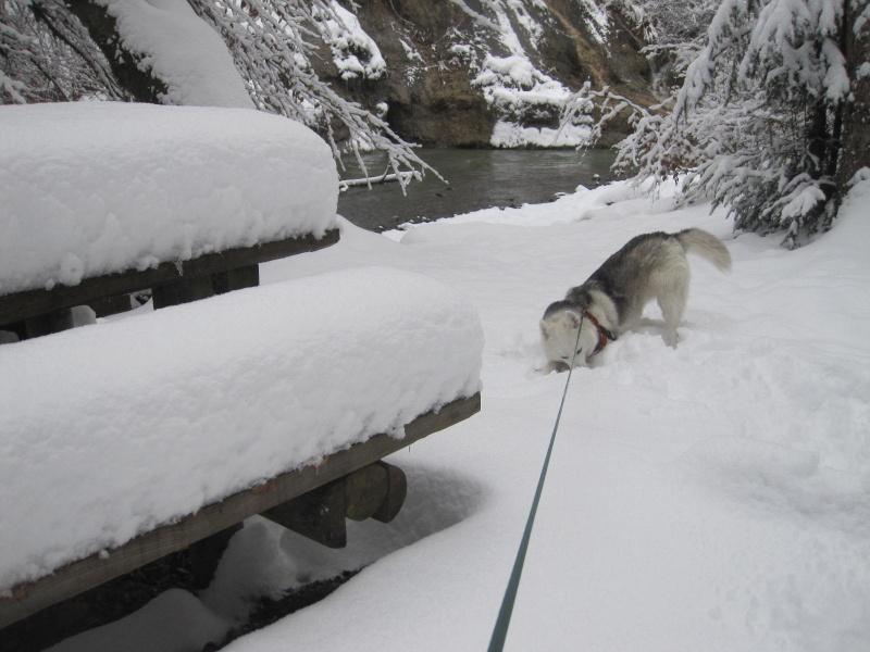 Saskia dans la neige en décembre 2011 1218