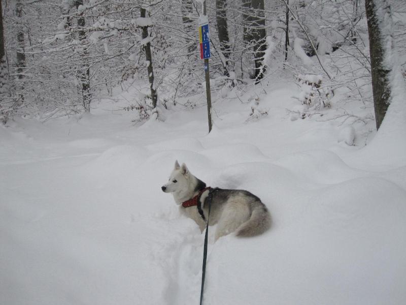 Saskia dans la neige en décembre 2011 1219