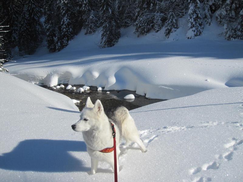 Saskia dans la neige à Morgins 1224