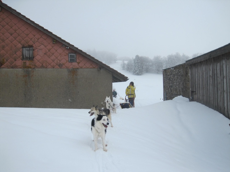 Deux attelages sur une neige portante 1227