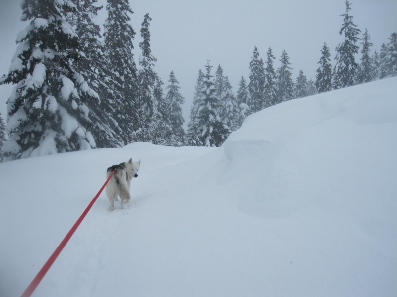 Nouvelles courses de Saskia dans la neige 1235