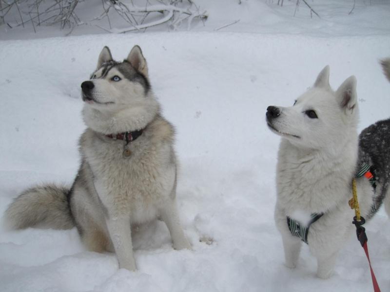 Nouvelles courses de Saskia dans la neige 1236