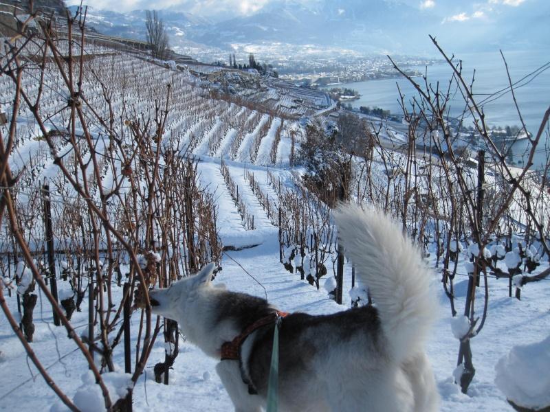 Nouvelles courses de Saskia dans la neige 1238