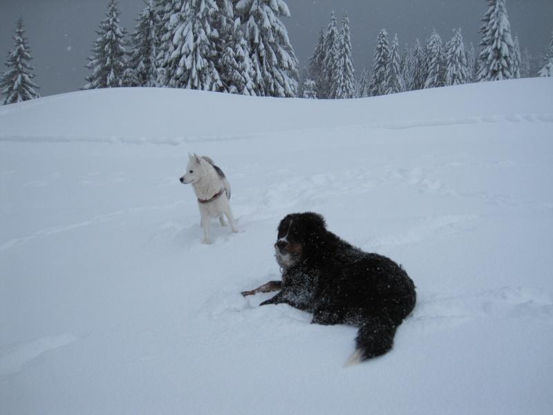 Nouvelles courses de Saskia dans la neige 1240
