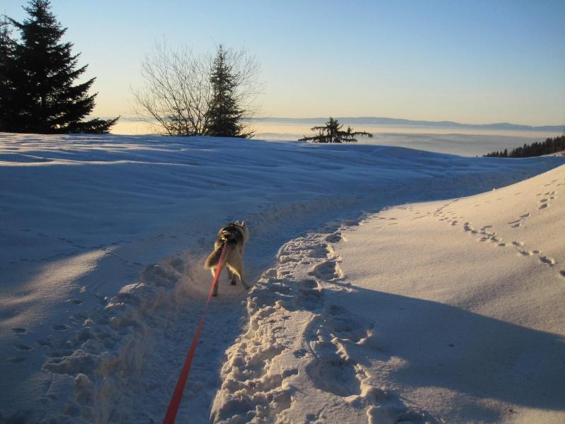 Saskia dans la neige en décembre 2011 - Page 2 125