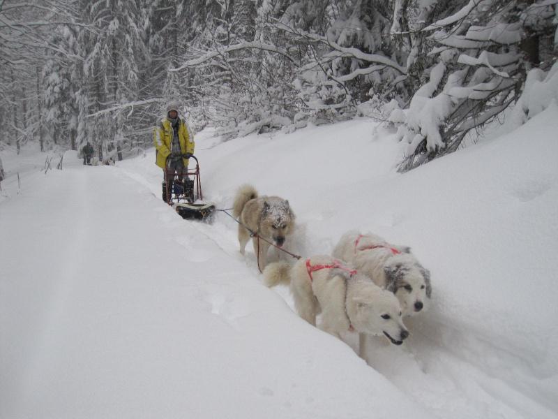 Deux attelages perdus dans 50 cm de neige poudreuse! 1315
