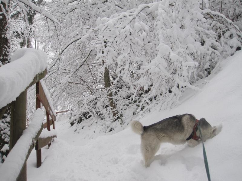 Saskia dans la neige en décembre 2011 1316