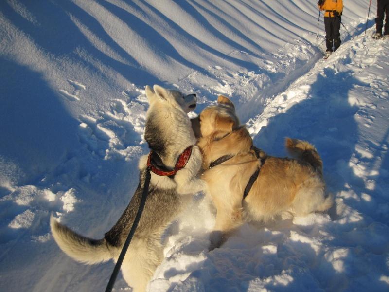 Saskia dans la neige en décembre 2011 1319