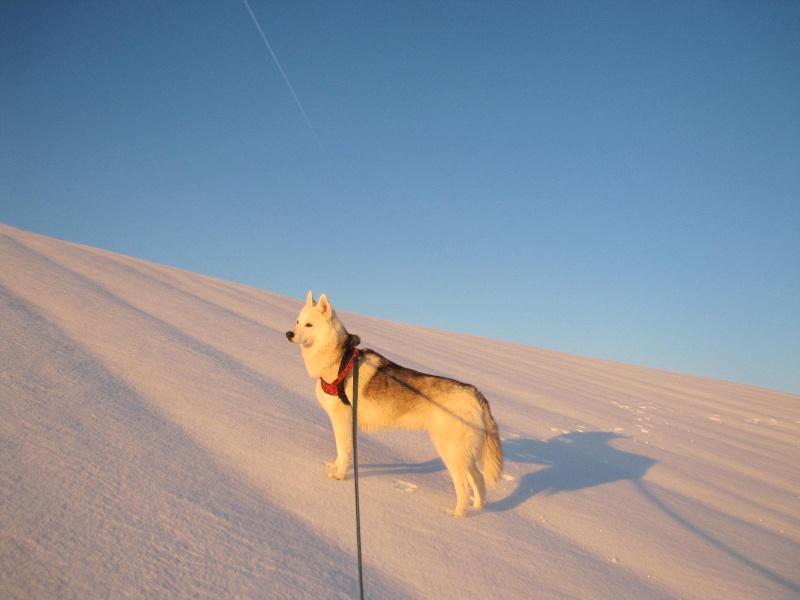 Saskia dans la neige en décembre 2011 1320