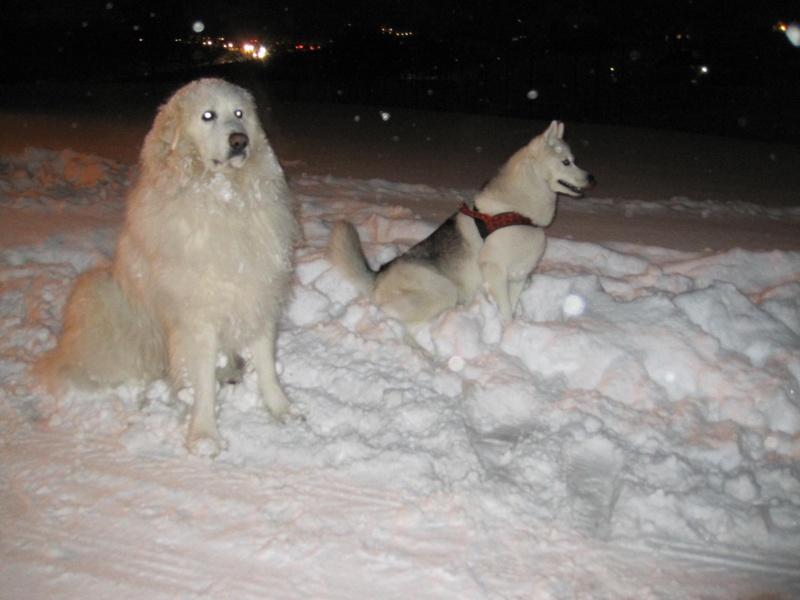 Nouvelles courses de Saskia dans la neige 1333