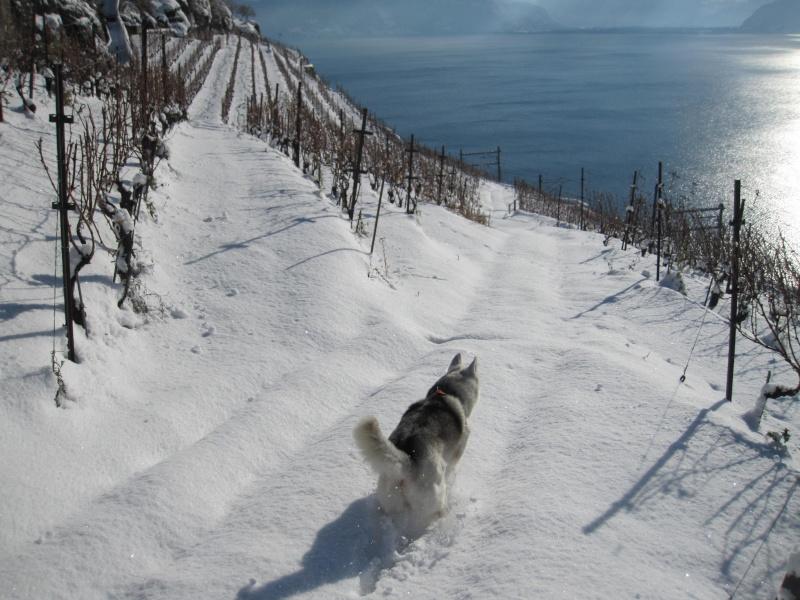Nouvelles courses de Saskia dans la neige 1334