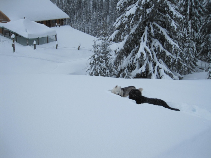 Nouvelles courses de Saskia dans la neige 1336