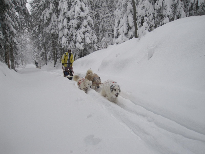 Deux attelages perdus dans 50 cm de neige poudreuse! 1415