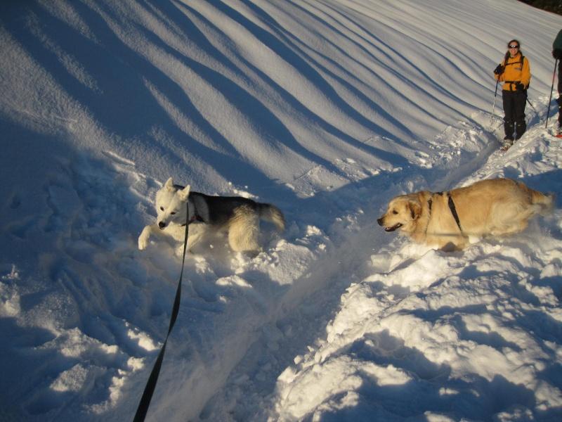 Saskia dans la neige en décembre 2011 1419