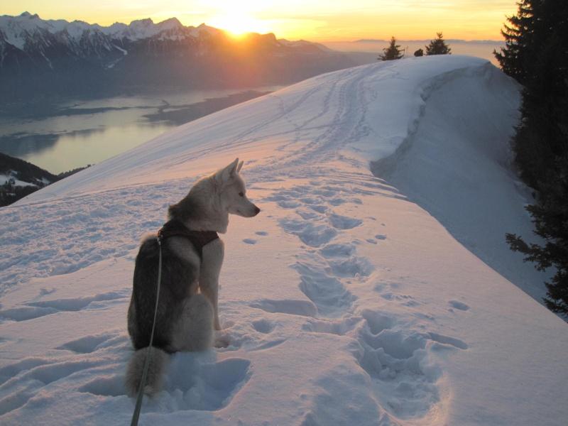 Saskia dans la neige en décembre 2011 1420
