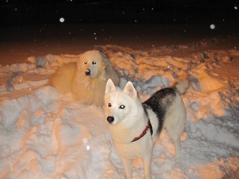 Nouvelles courses de Saskia dans la neige 1436